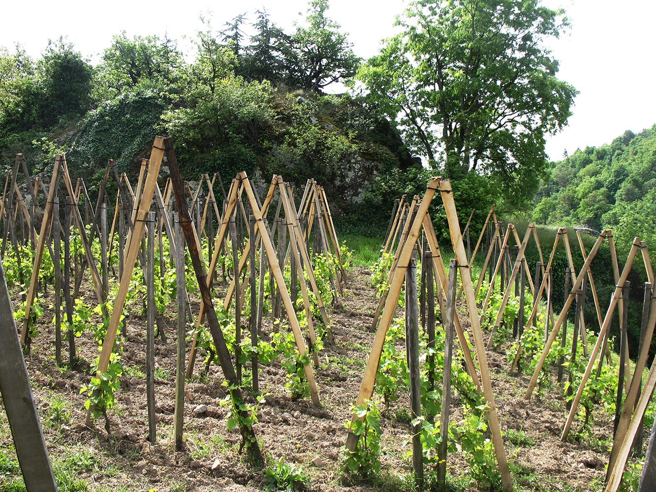 La vigne et son environnement